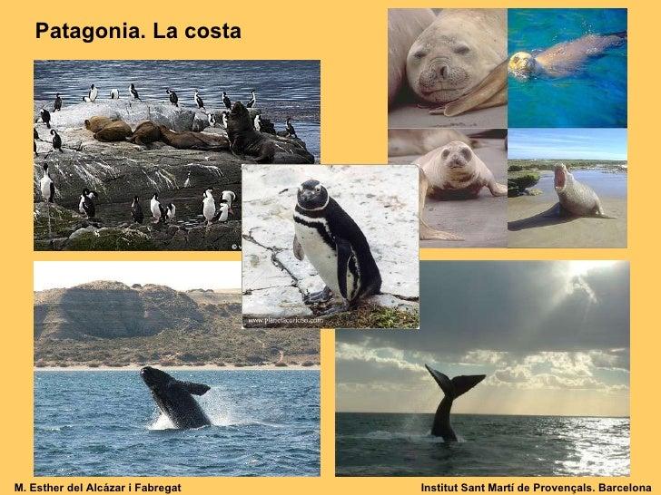 Patagonia Anys 20 Slide 2