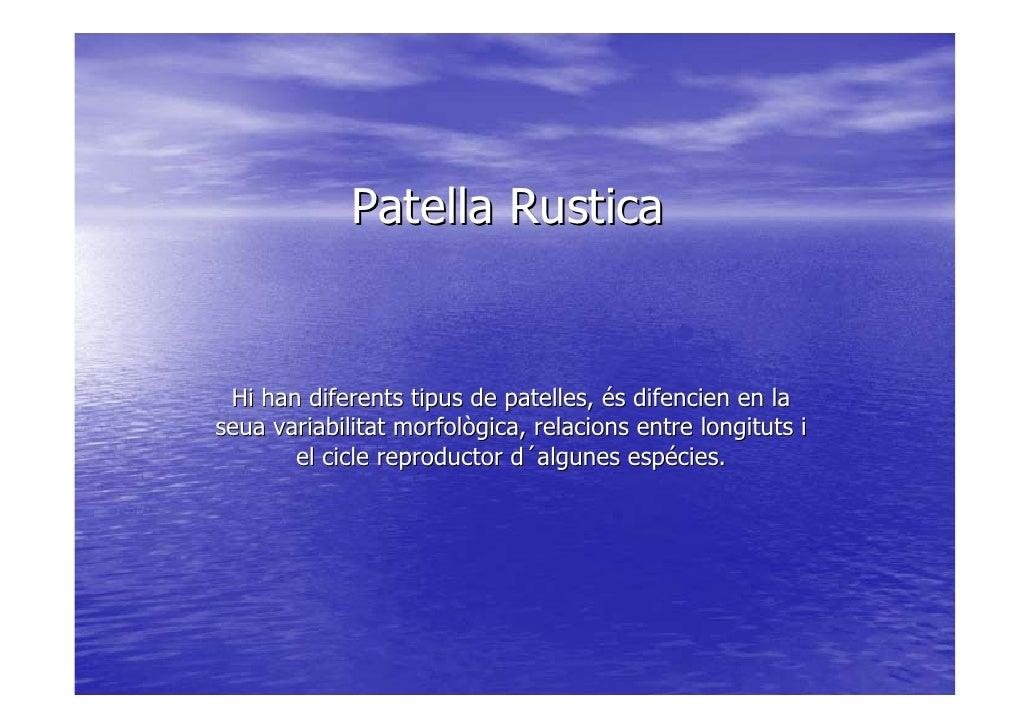 Patella Rustica    Hi han diferents tipus de patelles, és difencien en la seua variabilitat morfològica, relacions entre l...