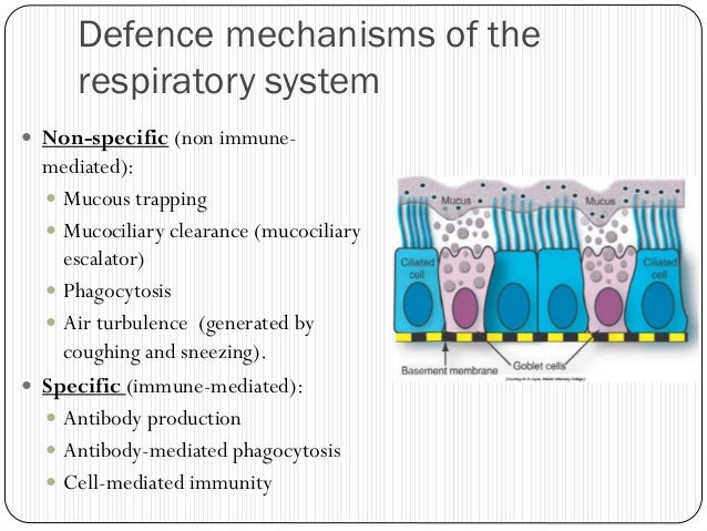 bacteria of the respiratory tract lab report Then to report the information  laboratory so that specialist,  the resistance patterns of the recovered bacteria isolates from respiratory tract infections.