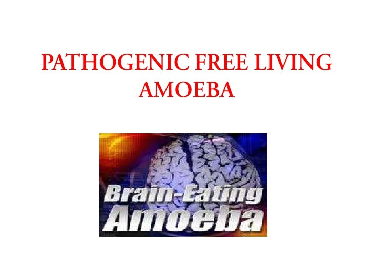 INTRODUCTION• Among the many genera of free-living  amoebae that exist in nature, members of  only four genera have an ass...