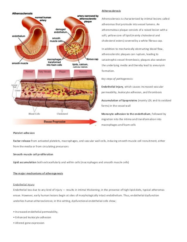 Atherosclerosis Atherosclerosis is characterised by intimal lesions called atheromas that protrude into vessel lumens. An ...