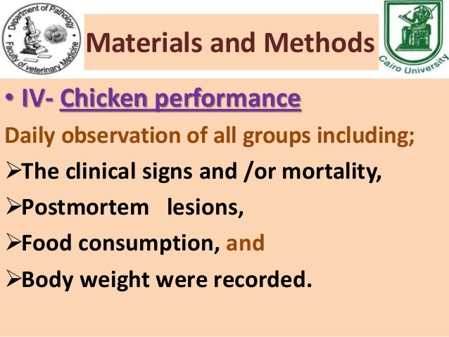 observation bacteria on a chicken piece Of campylobacter recovered from inoculated pieces of the  ment of bacteria to  chicken meat surfaces as a reason for  observed in the bacterial survival.