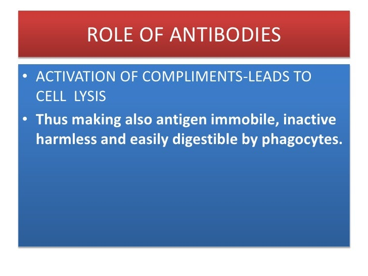 ROLE OF ANTIBODIES<br />The antibody has prepared the antigen for eating by the phagocytic cells. The term opsonin is used...