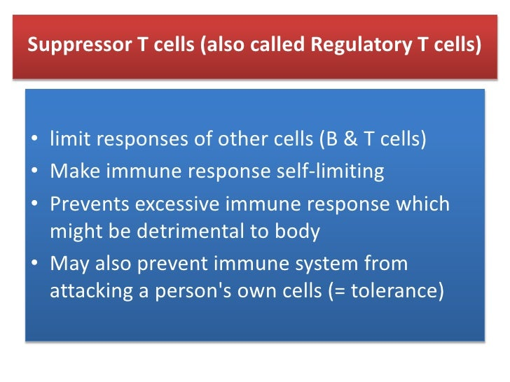 """Cytotoxic T cells<br />Activated killer T cells/(or """"turned on"""") or cytotoxic T cells with CD8 receptor  recognizes antige..."""