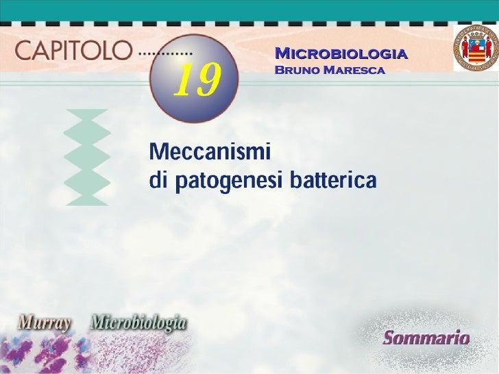 Microbiologia Bruno Maresca
