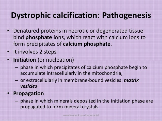 Dystrophic calcification: Pathogenesis • Denatured proteins in necrotic or degenerated tissue bind phosphate ions, which r...