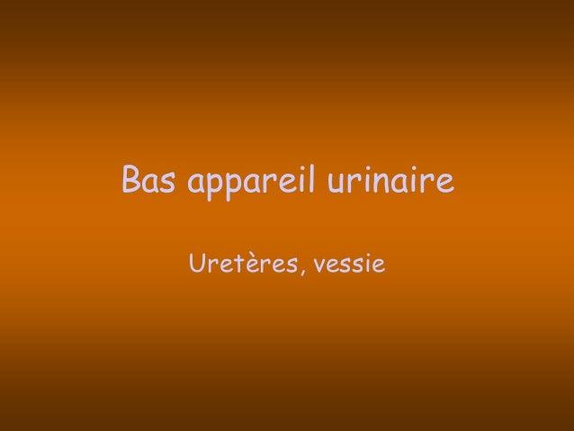 Pathologie de l_appareil_urinaire