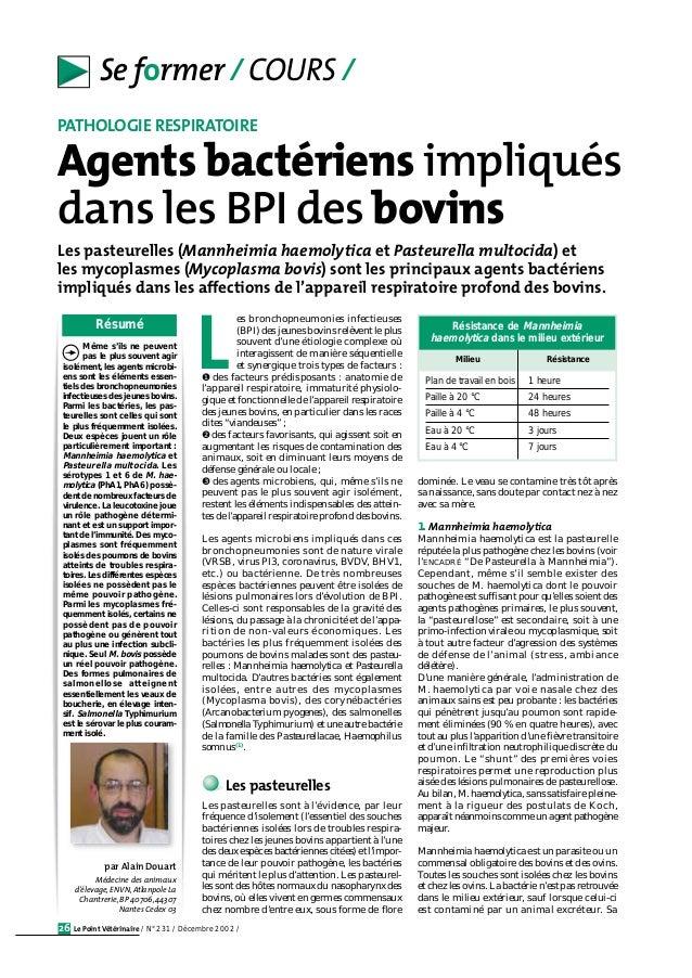 Se former / COURS /  PATHOLOGIE RESPIRATOIRE  Agents bactériens impliqués  dans les BPI des bovins  Les pasteurelles (Mann...
