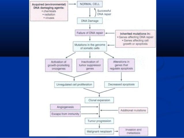 Pathology Neoplasm
