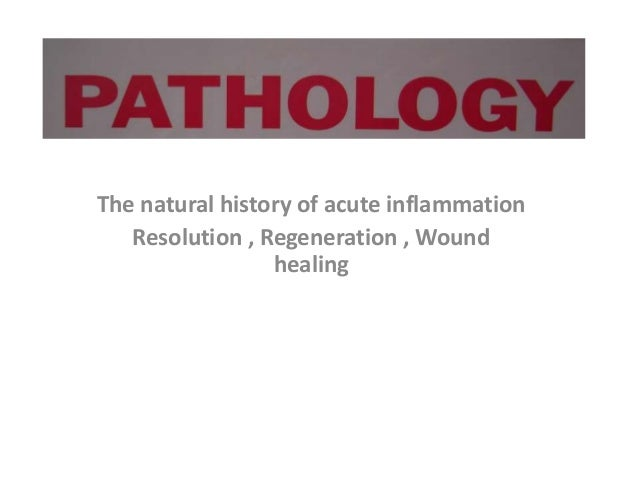 The natural history of acute inflammation Resolution , Regeneration , Wound healing