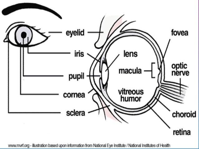 Pathology of eye i-2013-final