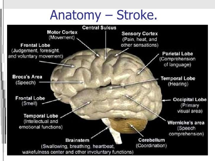 Pathology+of+stroke