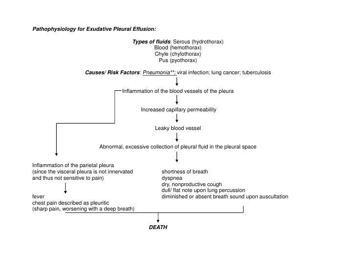 Pathophysiology for Exudative Pleural Effusion:<br />Types of fluids: Serous (hydrothorax)<br />Blood (hemothorax)<br />Ch...