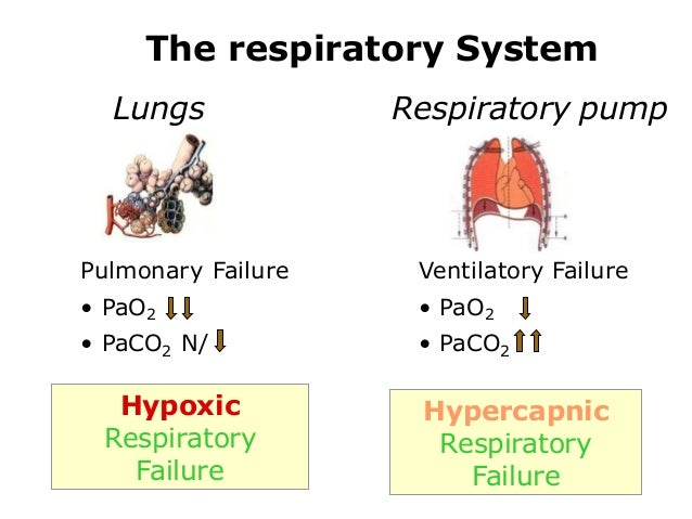 pathophysiology of respiratory failure, Skeleton