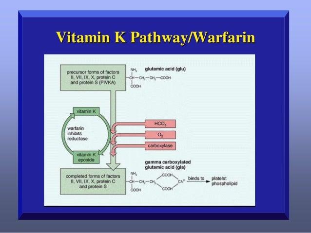 Vitamin K Pathway/Warfarin