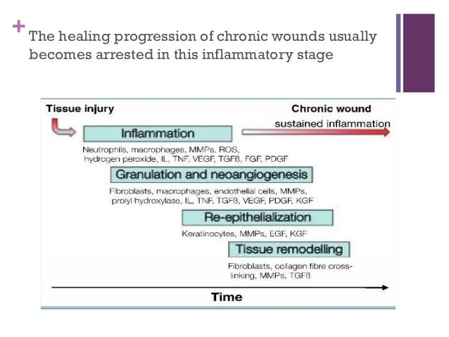 stages of wound healing pdf