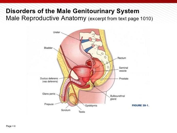 Pathophysiology presentation