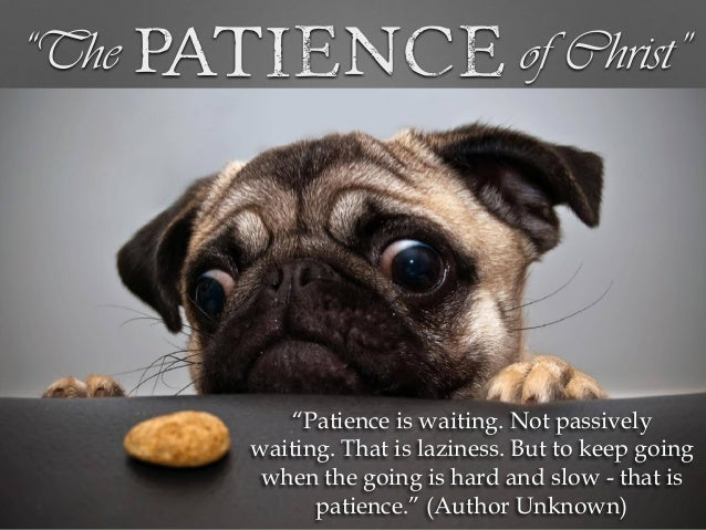 """24. """"The Patience ..."""
