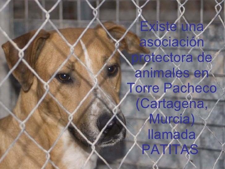 Existe una asociación protectora de animales en Torre Pacheco (Cartagena, Murcia) llamada PATITAS