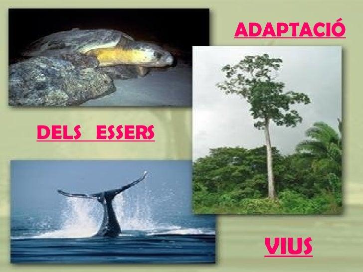 ADAPTACIÓ DELS  ESSERS   VIUS