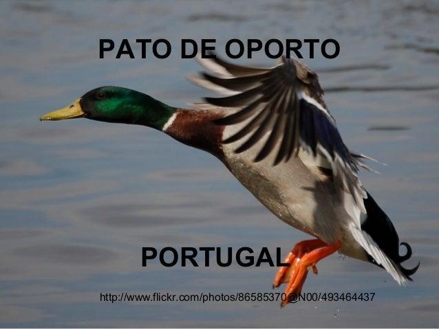 PATO DE OPORTO       PORTUGALhttp://www.flickr.com/photos/86585370@N00/493464437
