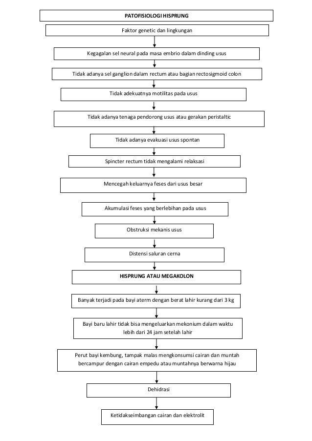 PATOFISIOLOGI HISPRUNG                    Faktor genetic dan lingkungan      Kegagalan sel neural pada masa embrio dalam d...