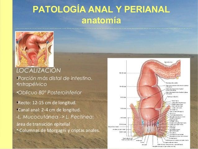 Patología anal y perianal.
