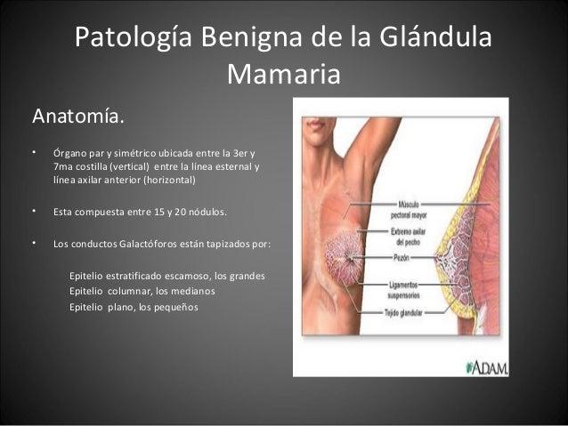 Patología benigna de la glándula mamaria