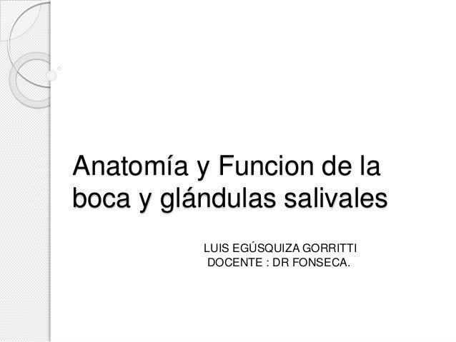 Anatomía y Funcion de la  boca y glándulas salivales  LUIS EGÚSQUIZA GORRITTI  DOCENTE : DR FONSECA.