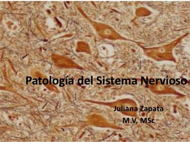 Patología del Sistema Nervioso Juliana Zapata M.V, MSc