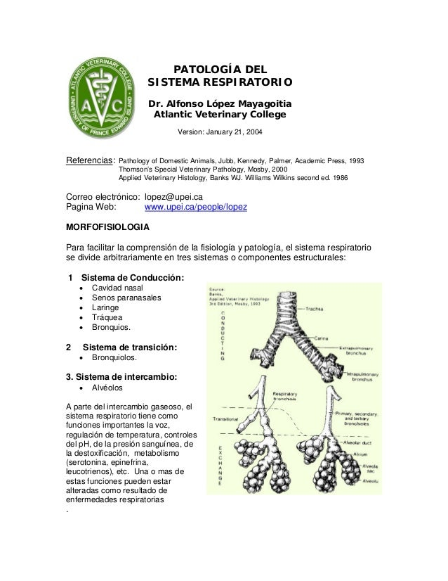 PATOLOGÍA DEL SISTEMA RESPIRATORIO Dr. Alfonso López Mayagoitia Atlantic Veterinary College Version: January 21, 2004  Ref...