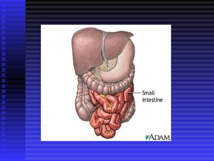 Patología intestino delgado Slide 2