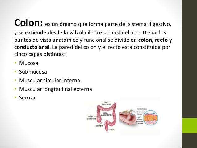 Patologías de colon y recto. Slide 2