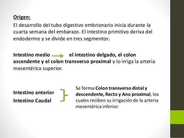 Patologías de colon y recto. Slide 3