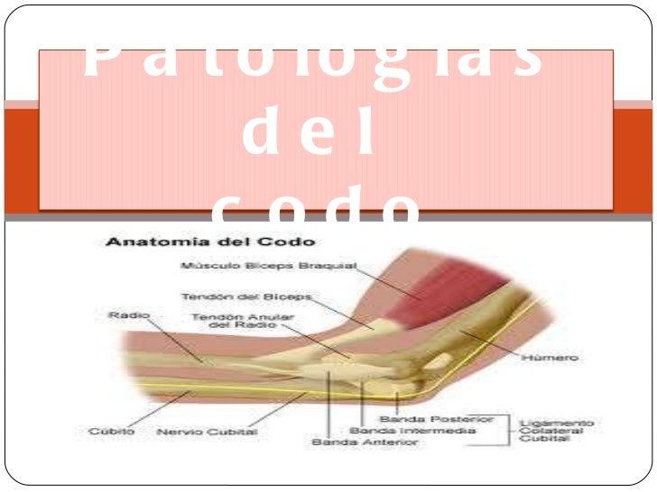 Patologías del codo<br />