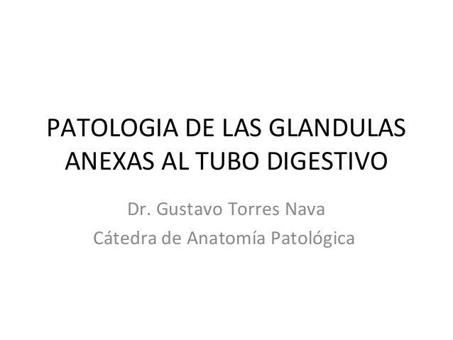 PATOLOGIA DE LAS GLANDULAS ANEXAS AL TUBO DIGESTIVO Dr. Gustavo Torres Nava Cátedra de Anatomía Patológica