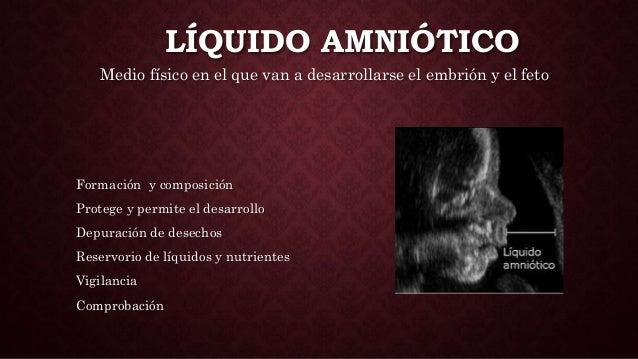 LÍQUIDO AMNIÓTICO Medio físico en el que van a desarrollarse el embrión y el feto Formación y composición Protege y permit...