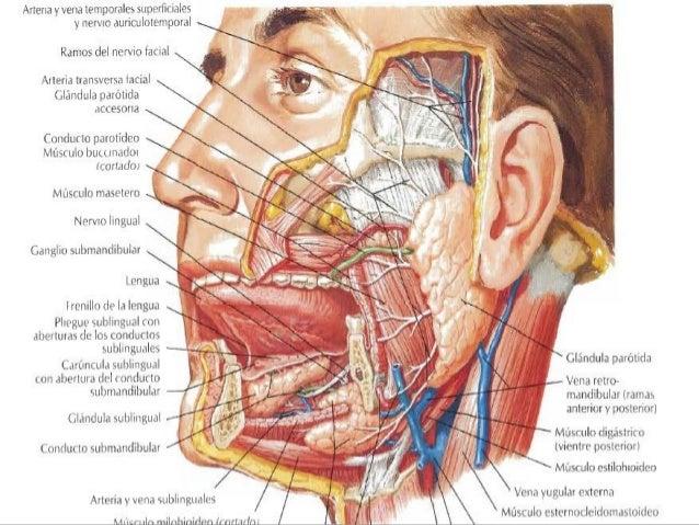 Patologia Quirurgica de Parotida