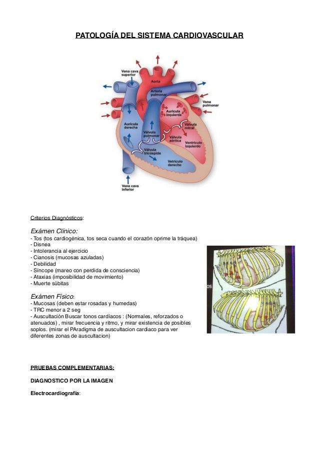 Introducción a las Patologias Cardiacas en Perros y Gatos
