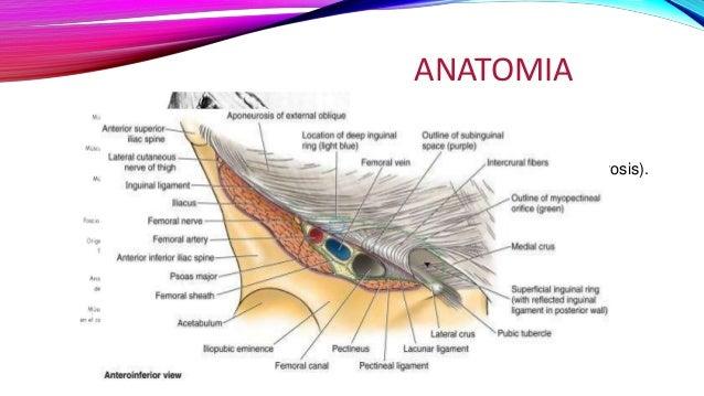 Patologías del canal inguinal