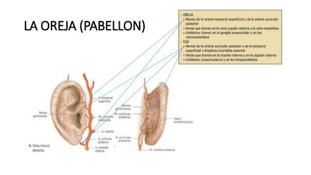 Patologias del oido