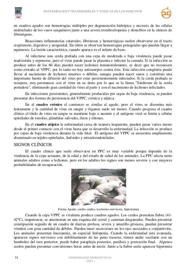 Patologias de los porcinos -