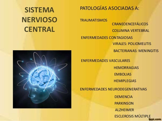 Patologias del Sistema Nervioso tarea 9 Slide 2
