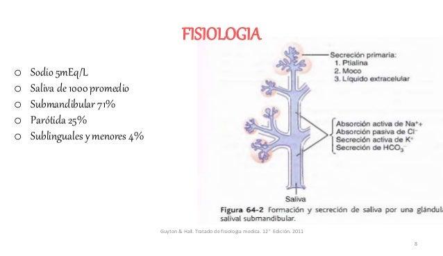 FISIOLOGIA o Sodio 5mEq/L o Saliva de 1000 promedio o Submandibular 71% o Parótida 25% o Sublinguales y menores 4% Guyton ...