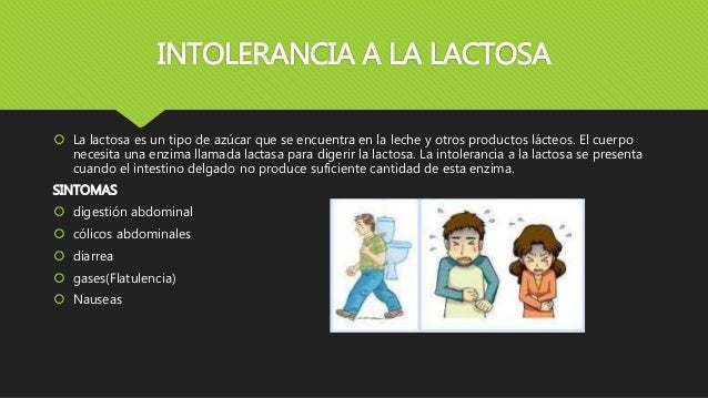 INTOLERANCIA A LA LACTOSA  La lactosa es un tipo de azúcar que se encuentra en la leche y otros productos lácteos. El cue...