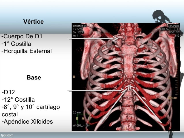 anatomia refenrecial torax