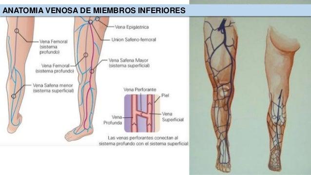 Patologia venosa de miembros inferiores