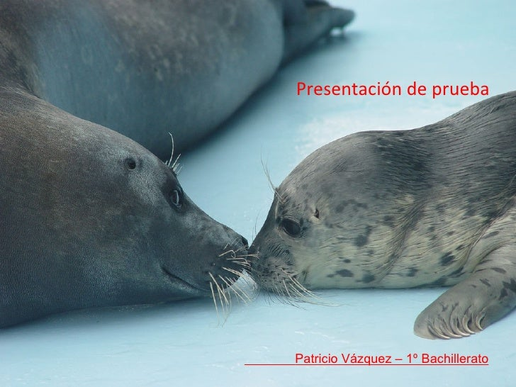 Presentación de prueba Patricio Vázquez – 1º Bachillerato