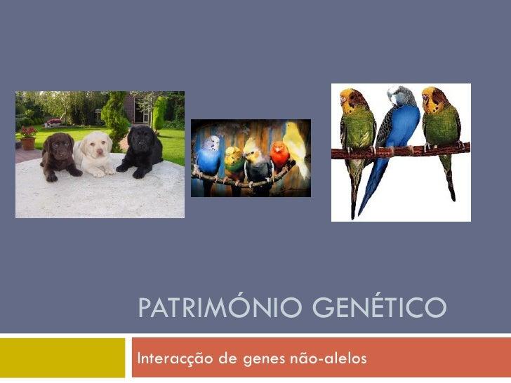 PATRIMÓNIO GENÉTICO Interacção de genes não-alelos