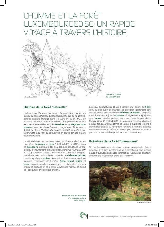 """21 L'homme et la forêt luxembourgeoise: un rapide voyage à travers l'histoire Histoire de la forêt """"naturelle"""" Celle-ci a ..."""